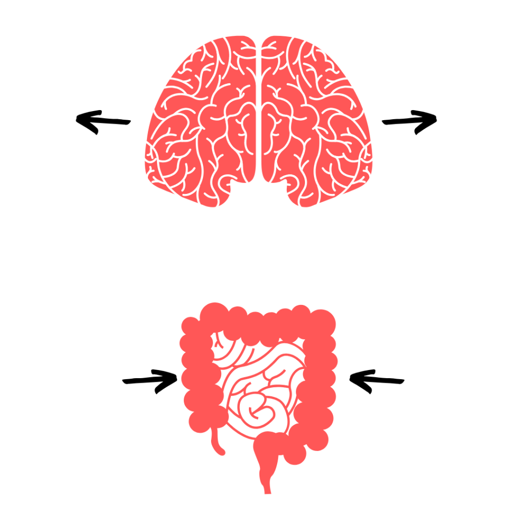 Grote hersenen en klein maag-darm stelsel