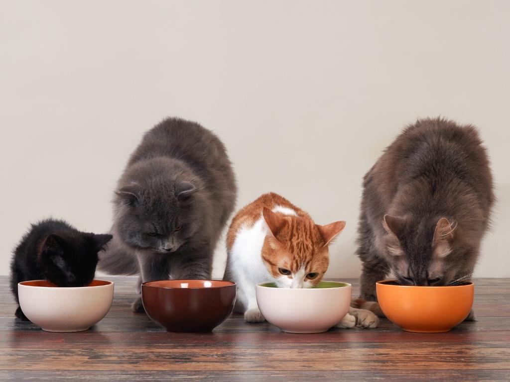 de trilogie van een gezonde kat